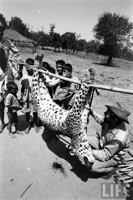 Tiger+Hunting+Photographs+of+India+-+1965+%252831%2529