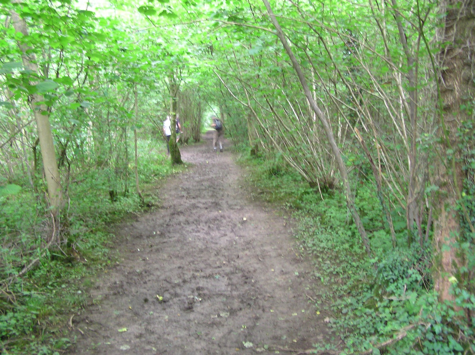 Rambling In Kent By Twisden Hucking Country Park