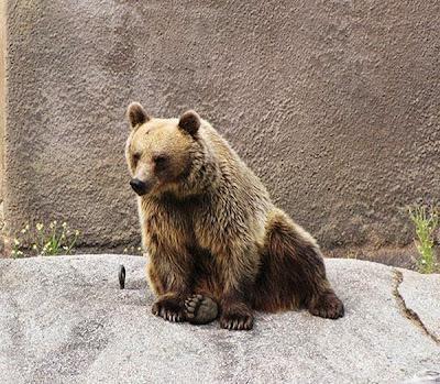 beruang santra5