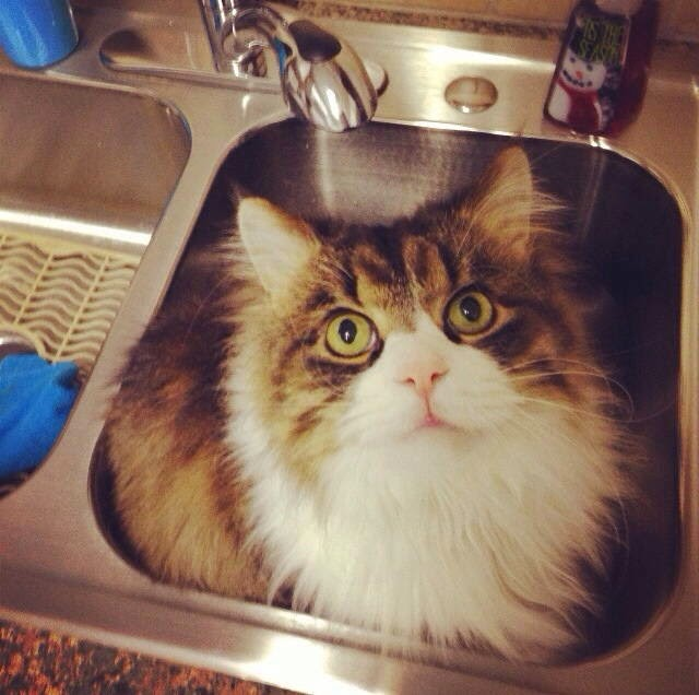 Funny cats - part 99 (40 pics + 10 gifs), cat pictures, cat sits in the sink