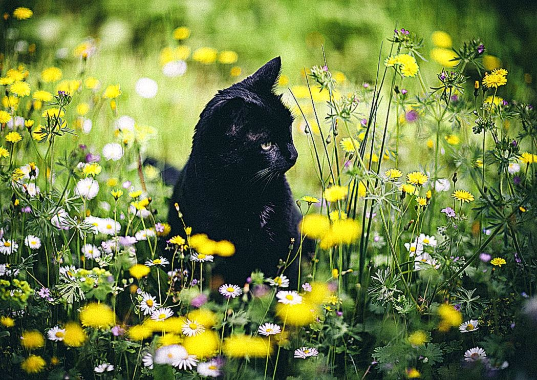 photoset cat popular landscape flowers bokeh spring artists on