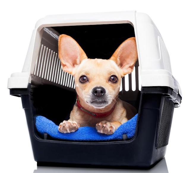 pet relocation melbourne