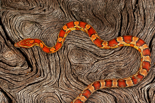 Beautiful Snakes Pictures
