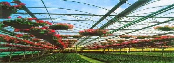 الزراعة المحمية