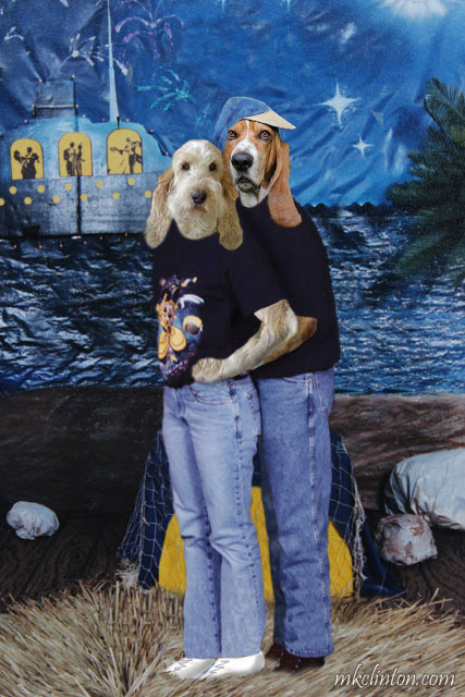 Basset and GBGV dressed in jeans and tees