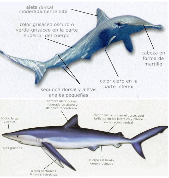 Ciencias Naturales 1: TEMA 6(1).- LOS PECES