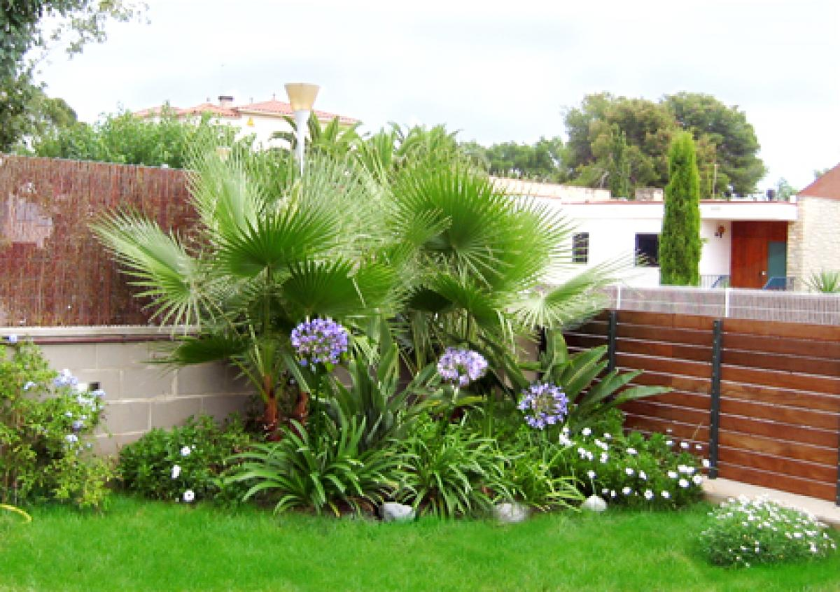 Arte y jardiner a trachycarpus fortunei - Decoracion de plantas ...