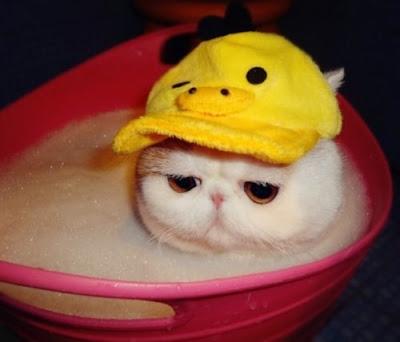 Bé mèo dễ thương nhất