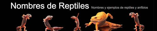 Nombres de Reptiles