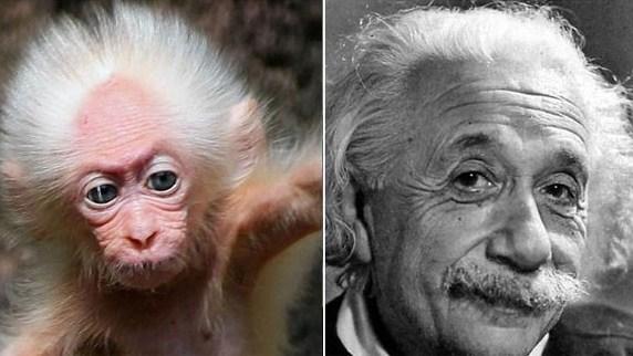 Macaco tem a cara de Albert Einstein