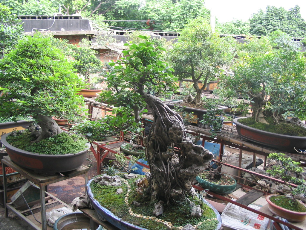 Bonsai - Penjing: Bonsai Tree Care