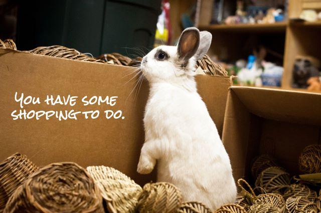 Rabbit Ramblings Bunny Monday Meme Day Shop
