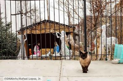 foto kucing di rumah natal 02