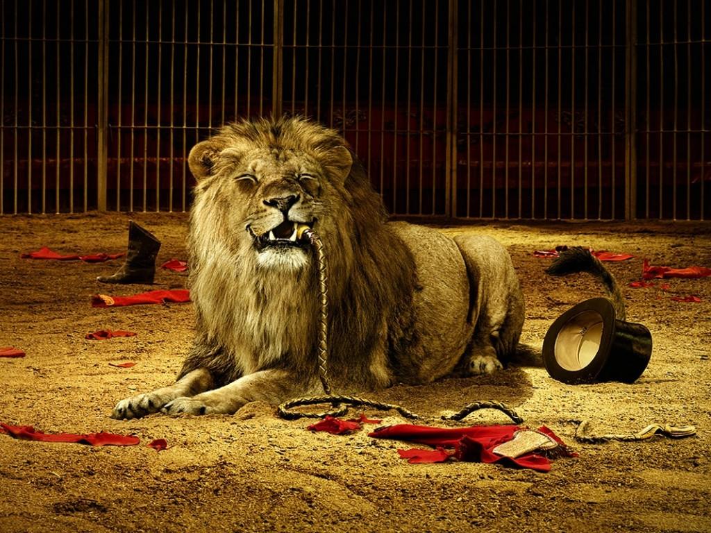 http://3.bp.blogspot.com/-w_QIeLlKtU0/TsuVHkFHi0I/AAAAAAAAA9U/n9lTJbXY1uc/s1600/Lion%2Bwallpapers%2Bmac%2B3.jpg