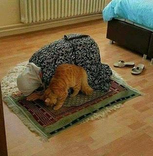 cat prayers  with girl 2