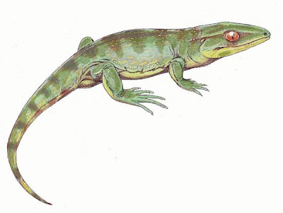 reptiles del carbonifero Gephyrostegus