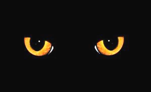 Latif S Blog Keistimewaan Penciptaan Kucing
