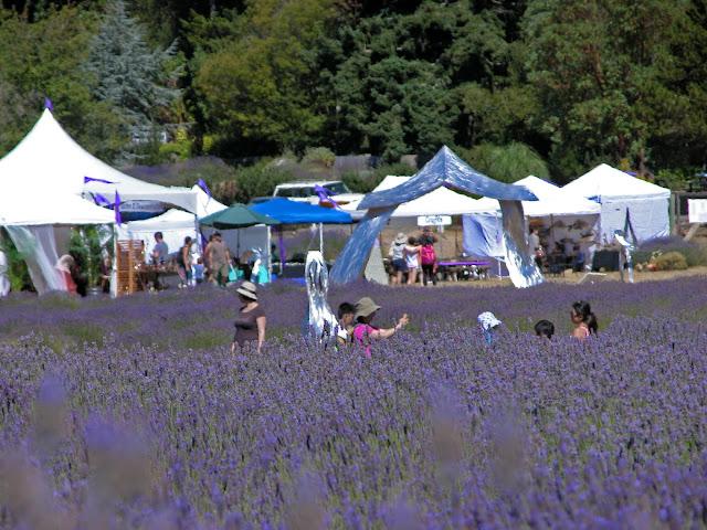 Lavender Festival at Pelindaba Lavender Farm