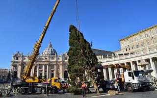 Vatican tree