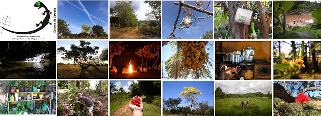 Calango do Cerrado - Humberto Firmo