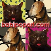 RETRATOS POP-ART DE NUESTRAS MASCOTAS