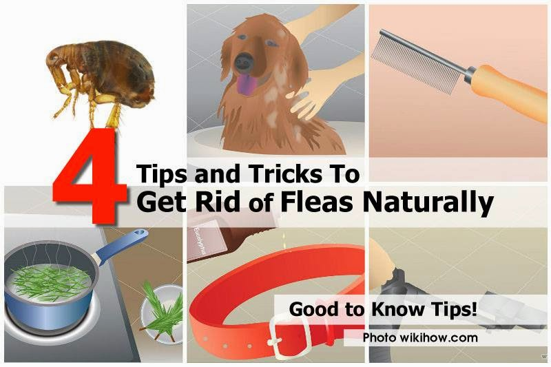 Http Www Wikihow Com Get Rid Of Fleas Naturally
