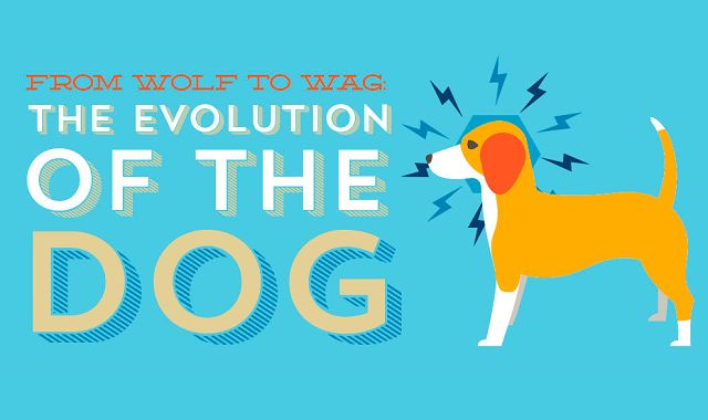 From Wolf to Wag The Evolution of the Dog