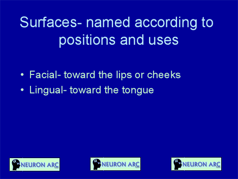 Surfaces of tooth ppt