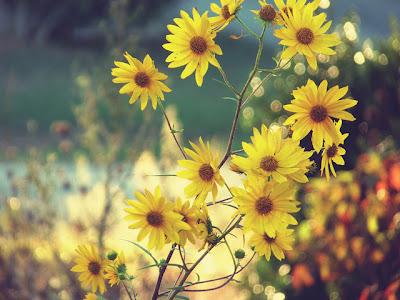 صور جميلة لفصل الخريف 2012 , صور ساحرة