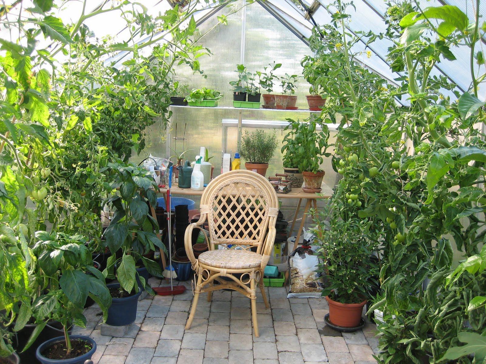 Växthus Odla : Mat och odla då var jag igång
