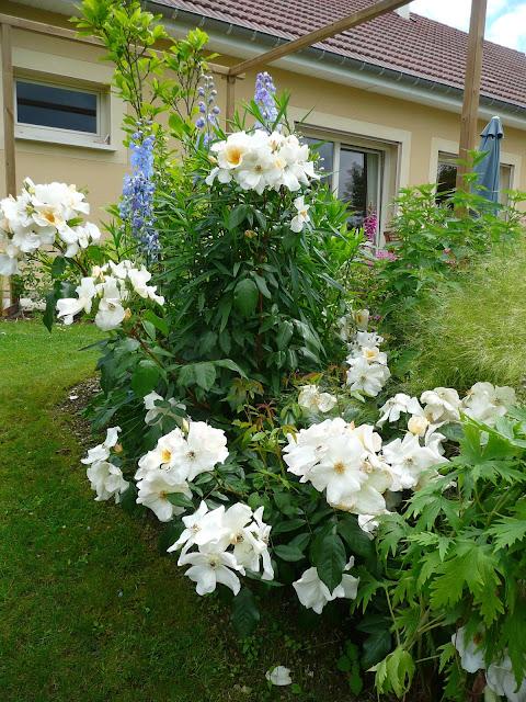 Notre jardin secret le massif lavender dream for Jardin secret 78