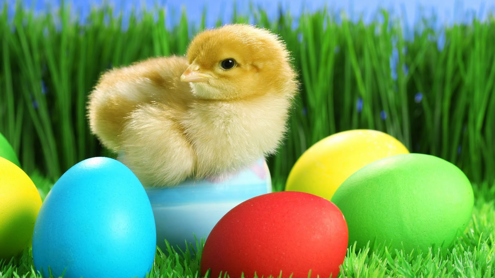 gallery for cute easter backgrounds wallpaper