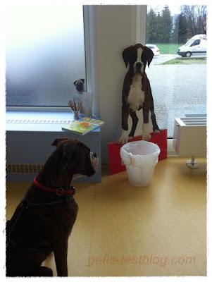 Boxer Amy beim Tierarzt
