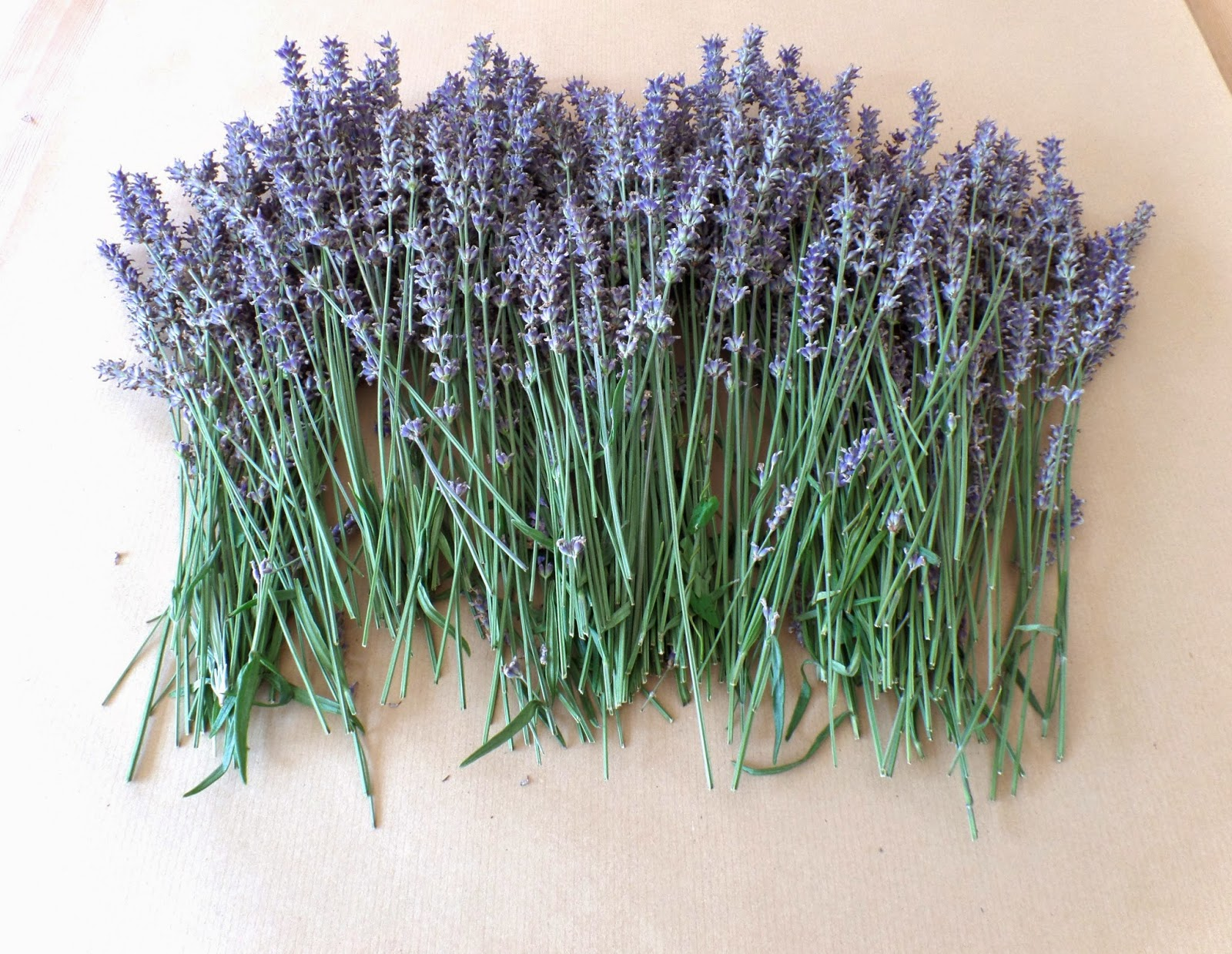 drying out lavender