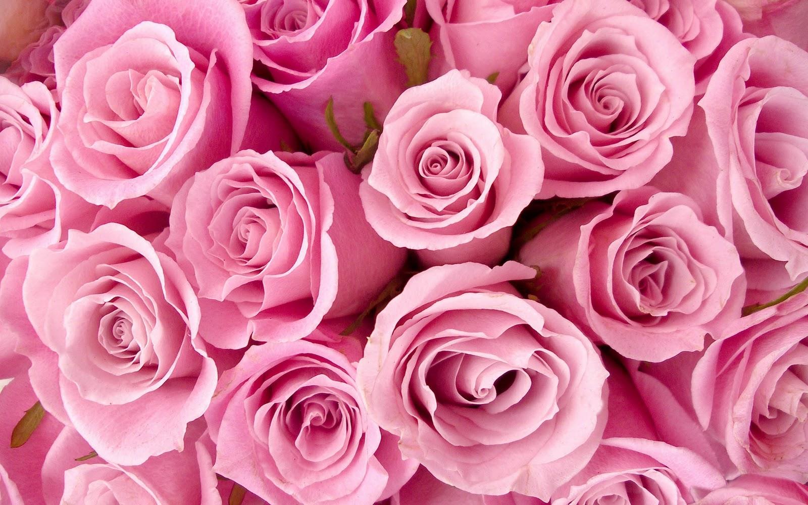 http://3.bp.blogspot.com/-wblleAUb1nE/UF2nxyE0bzI/AAAAAAAAAIE/_ZUw7fXk1Ec/s1600/pink-roses-wallpaper-hd.jpg