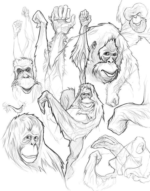 how to draw orang utans