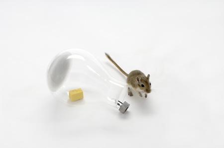 Trampas amigables para ratones mundo feliz - Trampas para ratas grandes ...