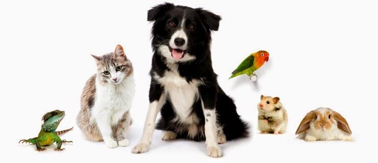 cachorro ou gatinho