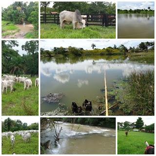 Fazenda de 24 Alqueires Rica em água - em Itapirapuã Goiás