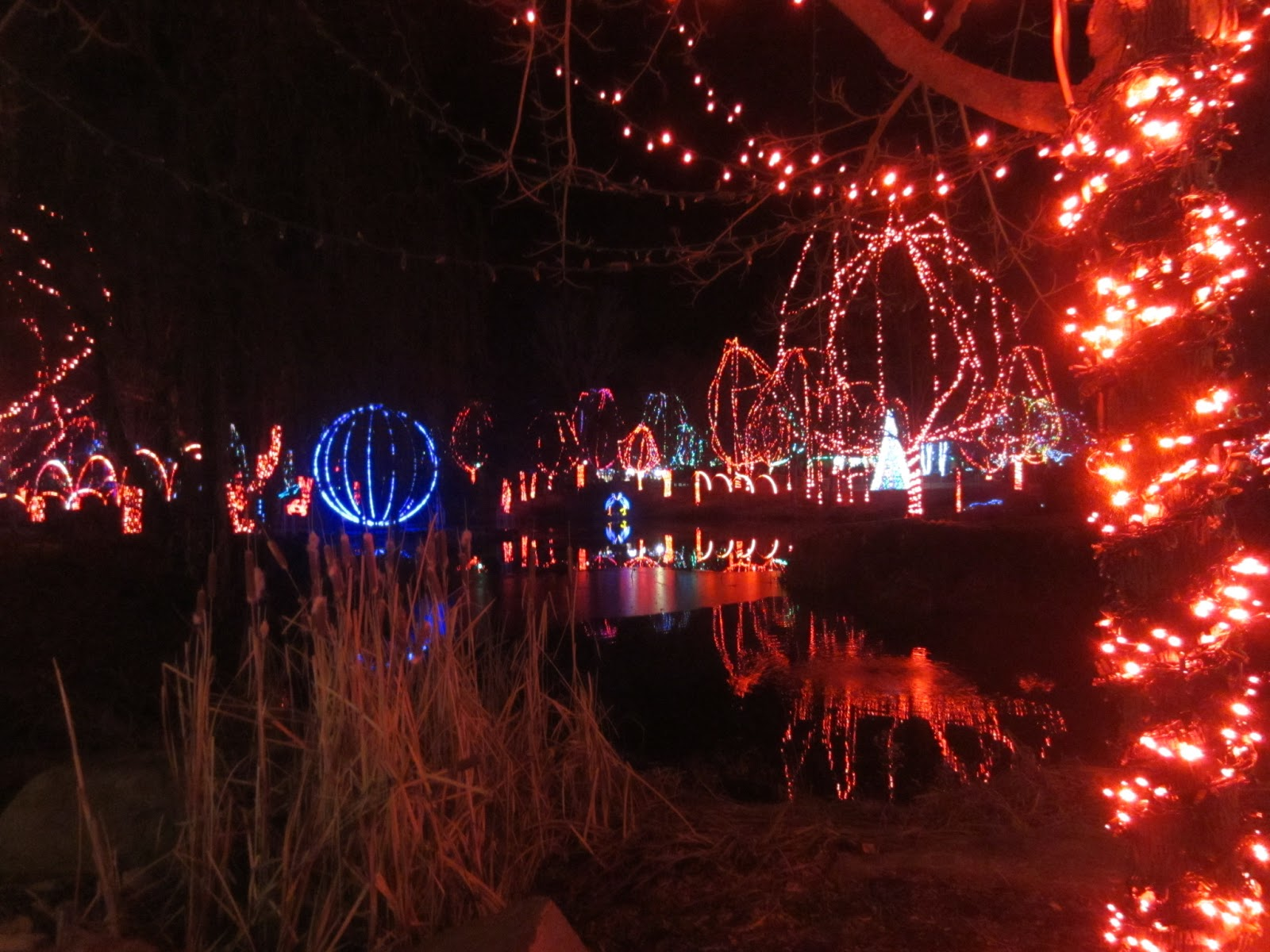 Violet S Silver Lining Things To Do In Ohio Wildlights
