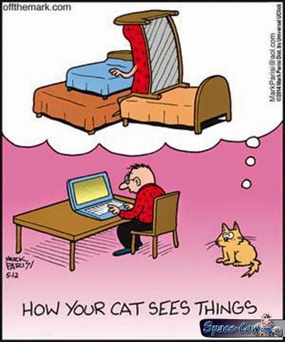 funny cute cats comics