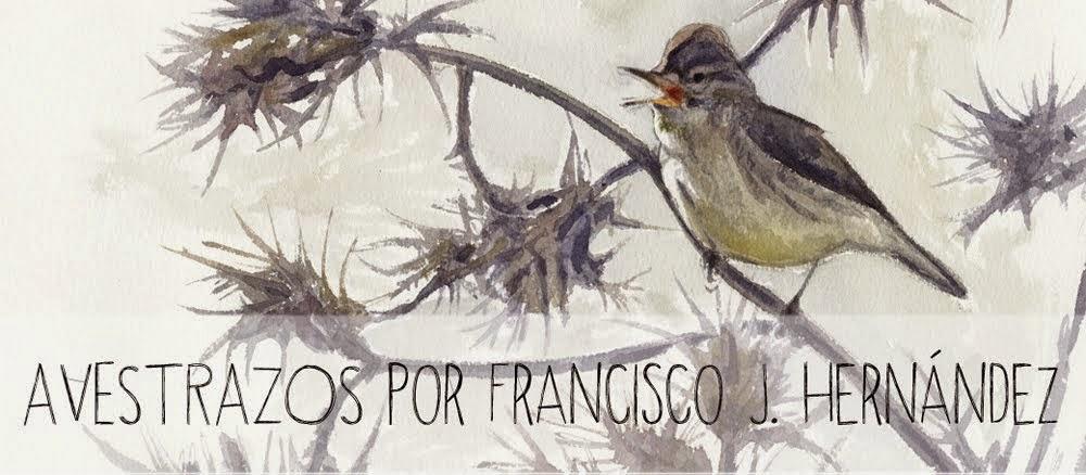 Blog Avestrazos