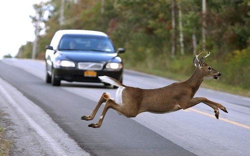 How to Avoid Hitting a Deer on the Road