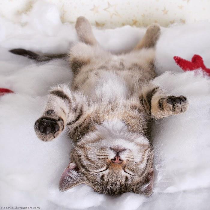 Gambar Kucing Oranye Lucu godean.web.id