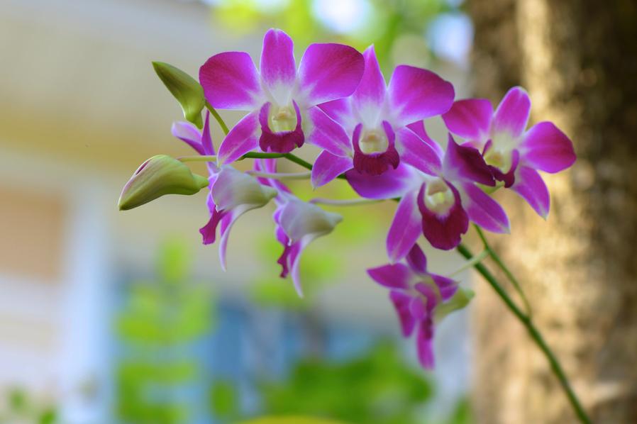 Fotos Flores Orquideas Gratis - 5 fotos de orquídeas de colores en alta resolución gratis