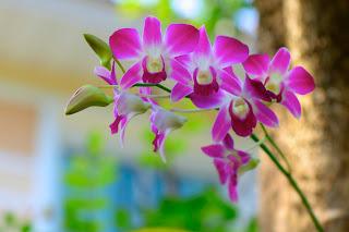 40 imágenes bonitas para compartir en Facebook gratis (imagenes facebook )