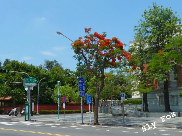 台南鳳凰木