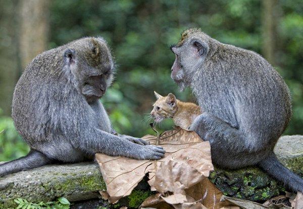 Mono adoptó gatito abandonado | Fotos maravillosas