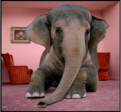 the elephants in the living room - The Elephant In The Living Room