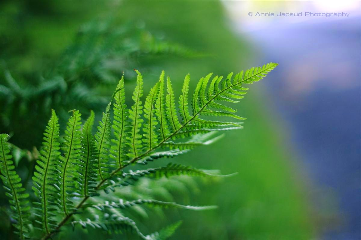 ferns, green, summer feeling